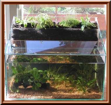 plante carnivore dans un aquarium